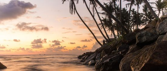 beach sunset boulders palm trees