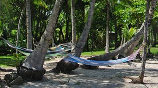 Coconut tree hammock chill beach